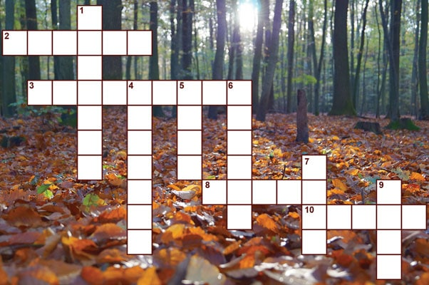 bible_trivia_crossword
